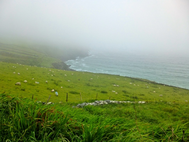 Sheeps in the Fog at the Dingle Peninsula